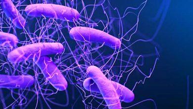Photo of تحديد البكتيريا المقاومة للأدوية
