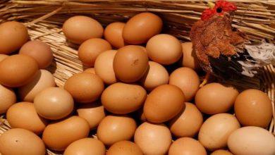 صورة 6 أنواع بيض أسوأ من السم